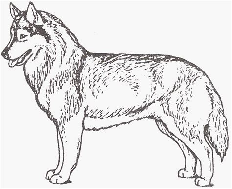 coloring pages of husky dogs siberian huskies coloring pages