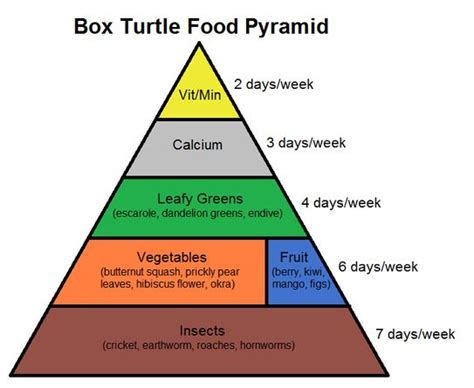 the dietitian s resupply box a guide to thru hiking on a plant based diet books 25 best ideas about turtle habitat on