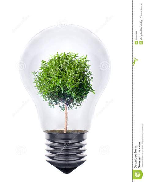 plant grow light bulb plant growing inside the light bulb stock photo image
