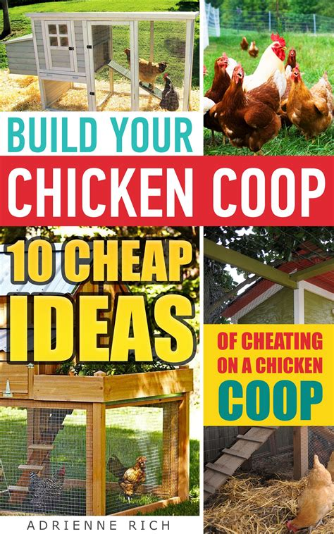 backyard chicken keeping 100 backyard chicken keeping the chicken 5 tips for