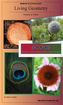 patterns in nature experiments 41 best images about math patterns in nature on