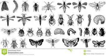 collection vector detailed insects stock images image 9258584