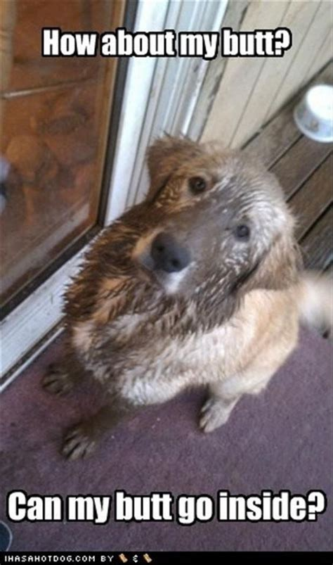 how to make dog smell go away in house muddy dog my german shep mix can smell a mudpuddle from