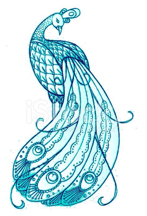 hand drawn peacock stock photos freeimages com