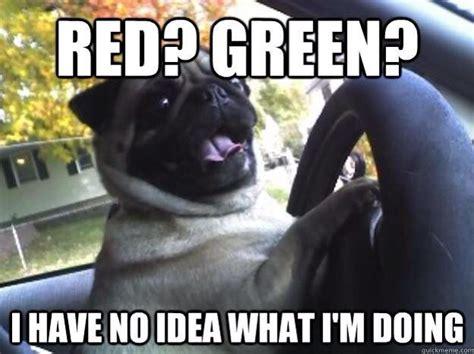 Dog Driving Meme - pug meme precious animals pinterest pug meme pug