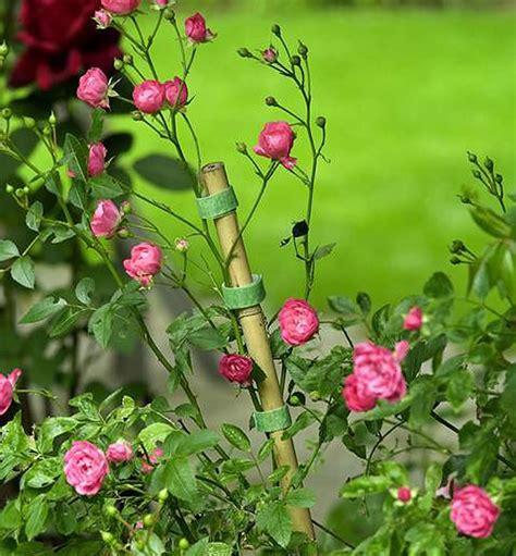 jardines con rosales jardiner 237 a 187 jardines con rosales