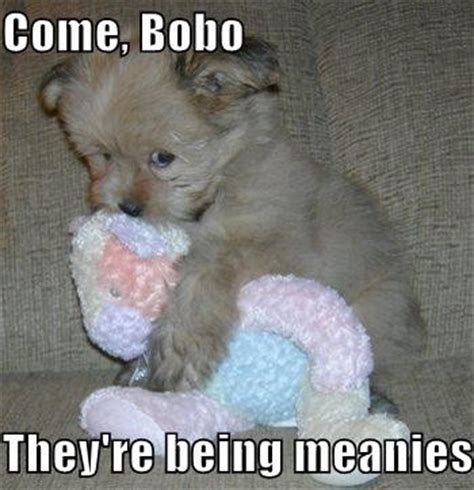 puppy jokes meanies joke overflow joke archive