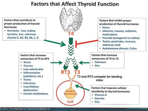 t 3 supplement thyroid test functional medicine functional nutrition
