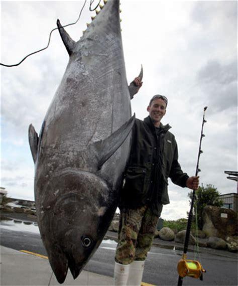 what kind of boat is the hot tuna fisherman lands 305kg tuna stuff co nz