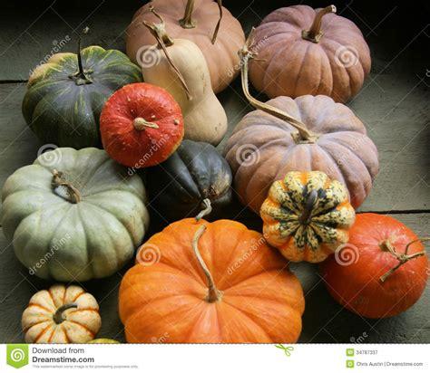 colored pumpkins assorted multi colored pumpkins stock image image 34787337