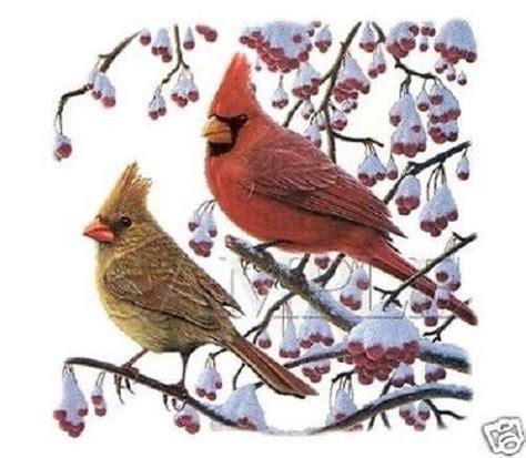 Bird Heat L by Cardinal Bird Heat Press Transfer T Shirt Sweatshirt Tote Or Fabric Print 213d Ebay