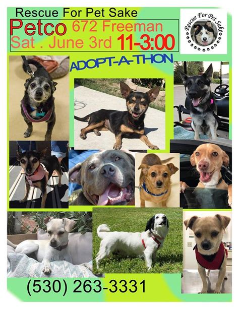 for dogs sake monthly adopt a thonrescue for pet sake