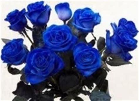 fiori da regalare a una ragazza fiori onomastico regalare fiori quali fiore regalare