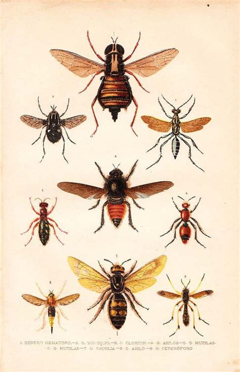 printable insect poster insects natural history and history on pinterest