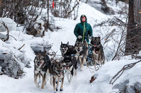 sled race breaking trail at the iditarod alaska s 1 000 mile sled race jstor daily