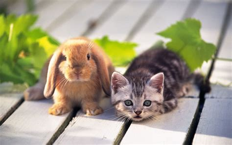 kumpulan gambar kartun kelinci makan wortel himpun kartun