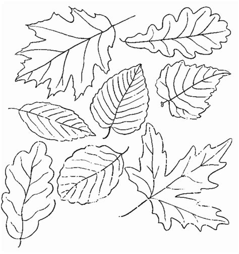 fall leaves coloring page printable fall coloring pages coloring town