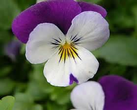 imagenes flores invierno bodas de invierno 191 cu 225 les son las flores m 225 s bonitas de