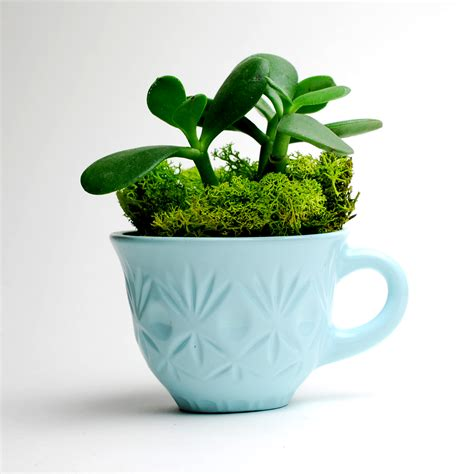Punch Planter by Carl Light Blue Singleton Punch Cup Planter