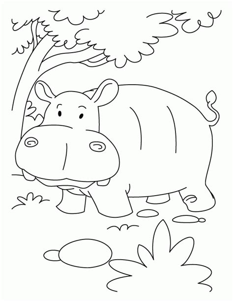 Hippopotamus Coloring Page by Hippopotamus Coloring Page Coloring Home