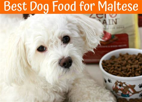 the best food for dogs the best food for maltese buying guide us bones