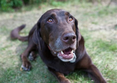 8 Tips On How To Choose A Vet For Your Pet by Tips To Help You Manage Shedding Season