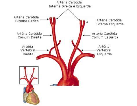 arteria mammaria interna aula de anatomia sistema arterial