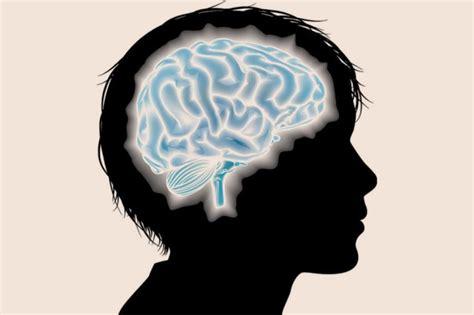 cerebro adolescente as 237 funciona el cerebro adolescente el economista