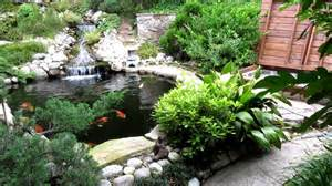 beautiful koi pond youtube