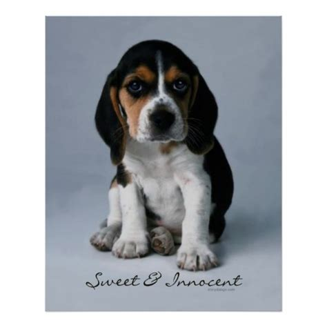 printable dog poster buy dog posters and art prints beagle puppy poster