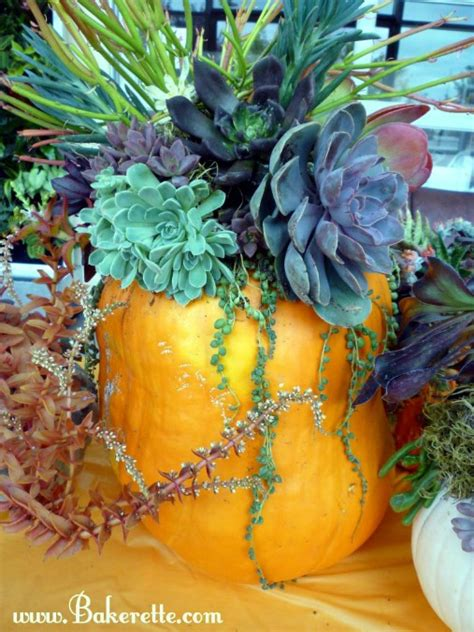 succulent centerpieces diy google search diy succulent pumpkin centerpiece bakerette