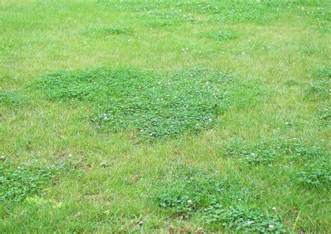 Unkraut Aus Rasen Entfernen 407 by Unkraut Und Moos Im Rasen Bek 228 Mpfen