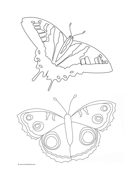 butterfly stages coloring pages free coloring pages of stages of a butterfly