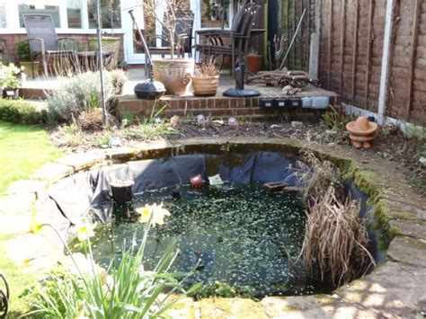 backyard fish pond maintenance backyard fish pond maintenance pond cleaning pond