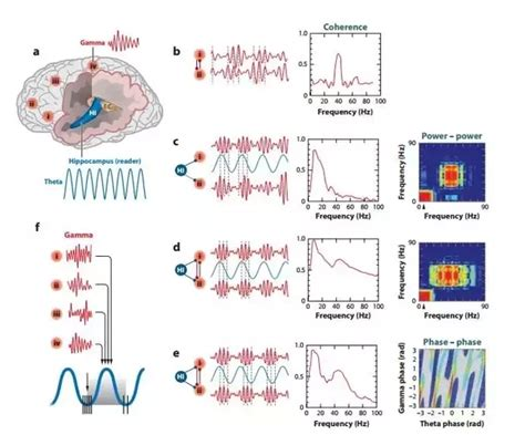 pattern generator brain what is the role and function of cortical oscillations