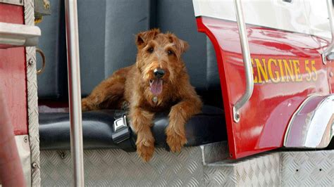 fire house dogs firehouse dog movie information