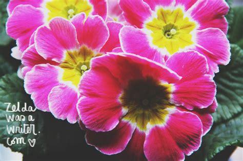 fiori e frasi fiori frasi una primula non fa primavera was