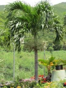 palm tree christmas groundworks bvi
