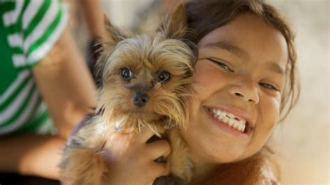 small kid friendly dogs 10 small breeds that are great with children