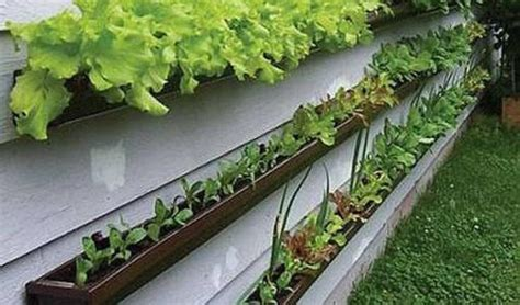 container vegetable gardening tips container gardening vegetables interesting ideas for home