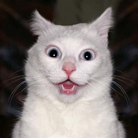funniest cute cat faces funny  cute animals