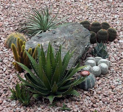102 best succulent and cacti landscape images on pinterest