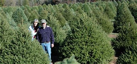 northeast new jersey christmas tree farms choose and cut