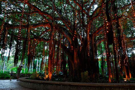 hanging tree lights