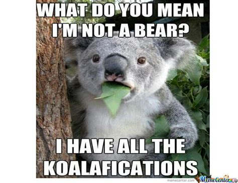 Koala Bear Meme - koala bear memes image memes at relatably com