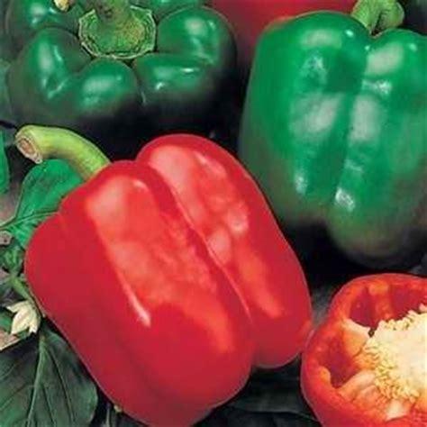 Isi 5 Biji Benih Biji Pepper Sweet Romano Mix Bibit Paprika Swee jual benih biji bibit sayur buah paprika hybrid hybrid sweet pepper rena store