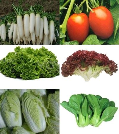 Benih Sayuran Tanam Sayuran hobby bercocok tanam paket benih sayuran