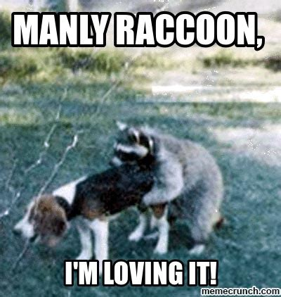 Raccoon Memes - manly raccoon