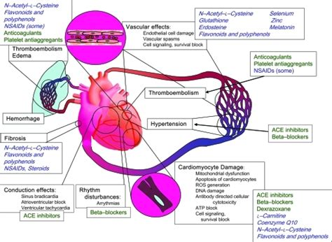 Anthracycline Also Search For Fig3 Cardiotoxicity Of Anticancer Drugs The Need For Cardio Oncology And Cardio