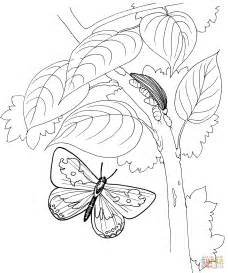 coloring pages of butterflies and caterpillars caterpillar and butterfly 2 coloring page free printable